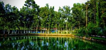 Vijver in gazipur, Bangladesh stock afbeeldingen