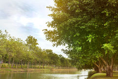 Vijver in groen park Stock Fotografie