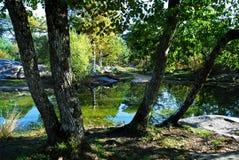 Vijver in het bos stock foto's
