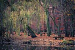 Vijver in het de herfstpark Royalty-vrije Stock Fotografie
