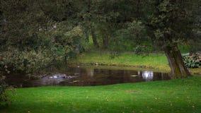 Vijver in het park Royalty-vrije Stock Foto