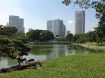 Vijver in het park naast wolkenkrabbers Stock Afbeeldingen