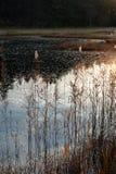 Vijver & Licht Royalty-vrije Stock Foto