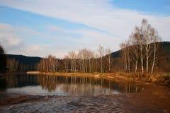 Vijver met berkbomen Stock Afbeelding