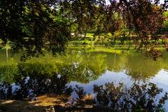 Vijver met boombezinningen tijdens dag bij park Royalty-vrije Stock Afbeeldingen