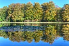 Vijver met de herfstbomen op Veluwe bij St. Hubertus Hunting Lodge royalty-vrije stock afbeelding