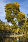 Vijver met een lange de herfstboom en een blauwe hemel royalty-vrije stock afbeeldingen