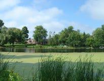 Vijver met groen vegetatie en huis royalty-vrije stock foto's