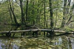 Vijver met waterbezinning en houten brug Royalty-vrije Stock Fotografie