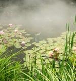 Vijver met waterlelies en mist Stock Foto
