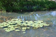 Vijver met waterlelies in het park royalty-vrije stock afbeeldingen