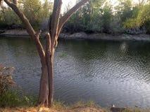 Vijver met zonsondergang en een boom Stock Afbeelding