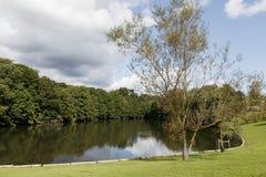 Vijver in stadspark met bezinning van bomen royalty-vrije stock afbeeldingen