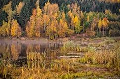 Vijver tijdens de herfst Royalty-vrije Stock Afbeeldingen