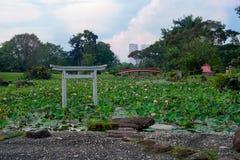 Vijver van lotuses in Japanse tuin Royalty-vrije Stock Fotografie