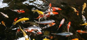 vijver vissen Stock Afbeelding