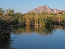 Vijverbezinningen Clark County Wetlands Park, Las Vegas, Nevada Royalty-vrije Stock Afbeeldingen