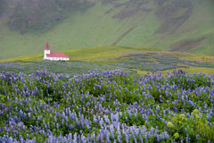 vik Исландии церков Стоковые Изображения RF