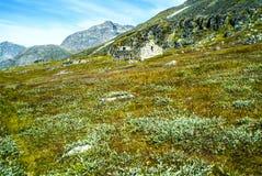 Viking krigare och bönder - sikt av Hvalsey Viking kyrkaängar, homesteadd och bergsikten i Grönland royaltyfri foto