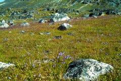 Viking krigare och bönder - sikt av sikten för för Hvalsey Viking kyrkaängar och berg i Grönland arkivbild