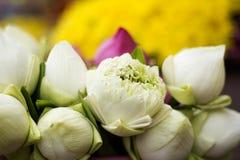 Vikt kronblad waterlily Royaltyfri Foto