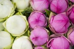 Vikt kronblad waterlily Royaltyfria Bilder