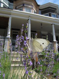 Viktorianischer Garten mit hübscher Motte Stockfoto