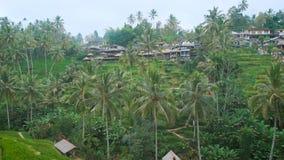 A vila é construída em um monte verde na selva Muitas casas pequenas e baixas estão próximos um do outro em um tropical bonito video estoque