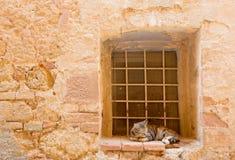 Vila av katten Arkivfoto