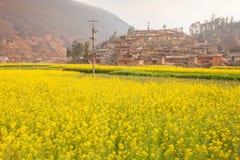 Vila chinesa encantador velha bonita com fie de florescência da mostarda fotografia de stock royalty free