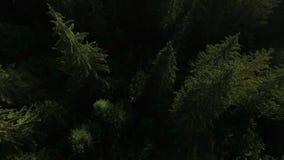 A vila da casa de campo é construída pela floresta vídeos de arquivo
