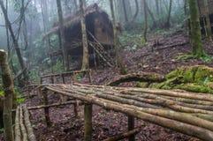 Vila de Asli do orangotango em uma selva perto de Cameron Highlands, Malásia fotografia de stock