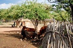 Vila de Himba com as cabanas tradicionais perto do parque nacional de Etosha em Namíbia Imagem de Stock Royalty Free