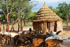 Vila de Himba com a cabana tradicional perto do parque nacional de Etosha em Namíbia Fotografia de Stock Royalty Free