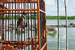 Vila de Ko Panyi imagem de stock