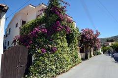Vila de Lania - Chipre Fotos de Stock Royalty Free