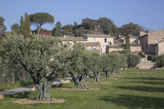 Vila de Lourmarin e Olive Trees, Provence Foto de Stock Royalty Free