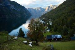 Vila de Otternes perto de Flam em Sognefjord em Noruega Imagem de Stock Royalty Free