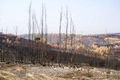 Vila de Rei Forest Fires Royalty Free Stock Photography