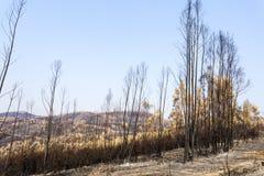 Vila de Rei Forest Fires Stock Image