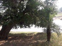 A vila de vista na associação do wather & da árvore fotografia de stock