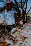 local fisherman cleaning the catch in the shade to get away from the tropical heat royalty free stock image