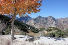 Vila e pomar nas montanhas Foto de Stock