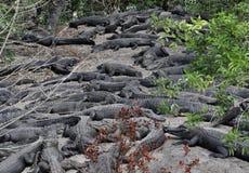 Vila för alligatorer royaltyfri bild