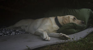 vila för hund Royaltyfri Bild