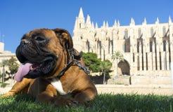Vila för hund arkivfoto