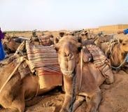 Vila för kamel royaltyfri bild