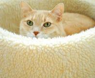 vila för katt Royaltyfri Fotografi