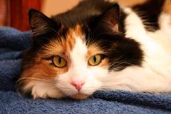 vila för katt Royaltyfria Bilder