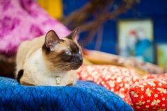 vila för katt Arkivfoton